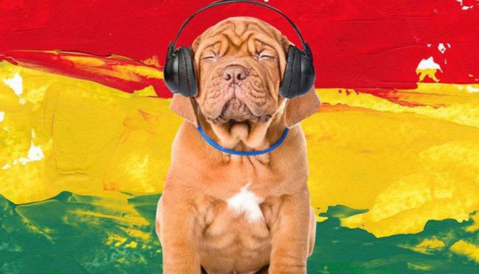 Köpeğinizi Reggae ile Sakinleştirin