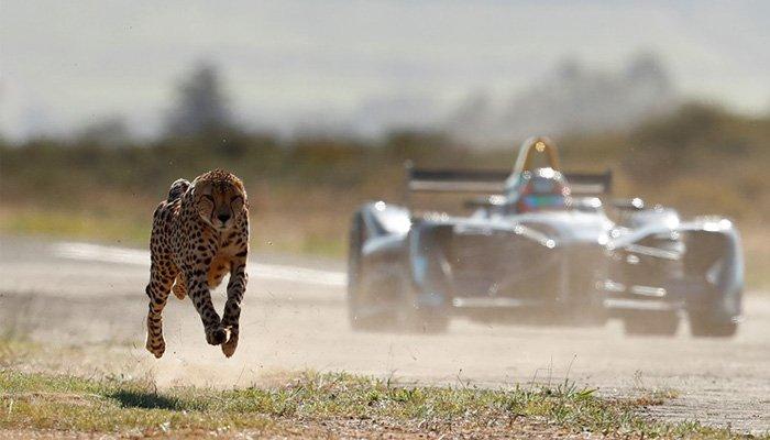Formula E Aracı Çitaya Karşı