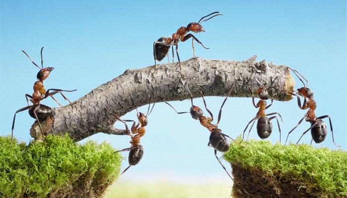 Karıncaların Gücü